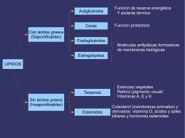 LIPIDOS Con ácidos grasos (Saponificables) Sin ácidos grasos