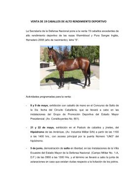venta de 19 caballos de alto rendimiento deportivo