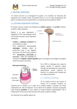 6. SISTEMA NERVIOSO 6.1 SISTEMA NERVIOSO CENTRAL 6.1.1
