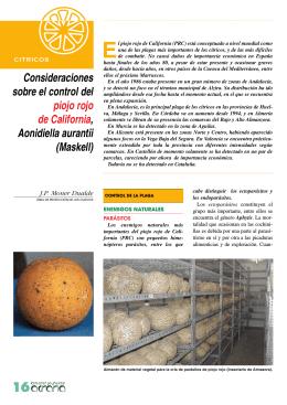 consideraciones sobre el control del piojo rojo de california
