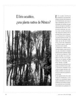 El lirio acuático, ¿una planta nativa de México? - E-Journal