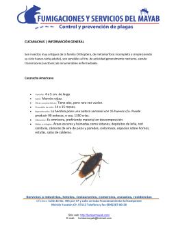 CUCARACHAS | INFORMACIÓN GENERAL • Tamaño: 4 a 5 cm. de
