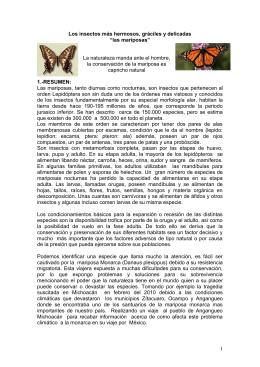 """1 Los insectos más hermosos, gráciles y delicadas """"las mariposas"""