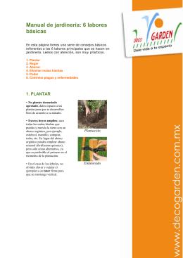 Manual de jardinería: 6 labores básicas