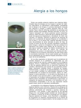 Alergia a los hongos - Hongos y Actinomicetos Alergénicos