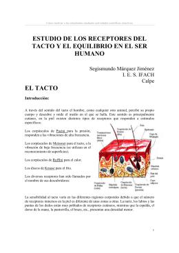 ESTUDIO DE LOS RECEPTORES DEL TACTO Y EL EQUILIBRIO