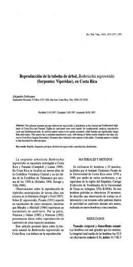 Reproducción de la toboba de árbol, Bothriechis nigroviridis