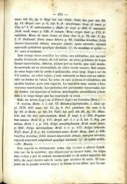 muse. tab. 55, fig. 1. Engl. bot. tab. 1649. Vaill. bot. par. tab. 29, fig