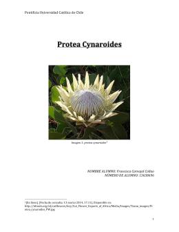Page 1 Pontificia Universidad Católica de Chile 1 Imagen 1: protea
