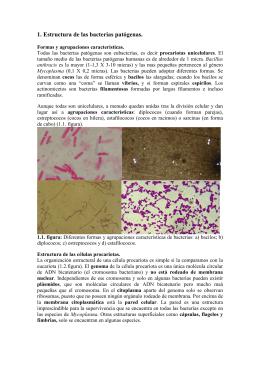 tema 1. Estructura de las bacterias patógenas