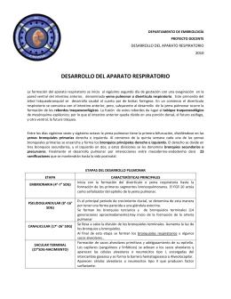 DESARROLLO DEL APARATO RESPIRATORIO