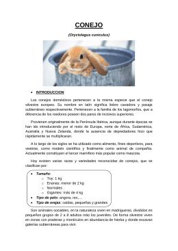 CONEJO - Clínica Veterinaria Burjassot