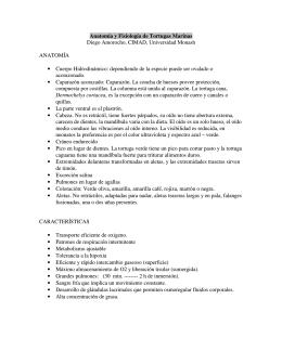 Anatomía y Fisiología de Tortugas Marinas Diego