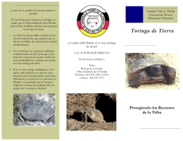 Tortuga de Tierra - Seminole Tribe of Florida