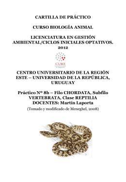 Filo CHORDATA, Subfilo VERTEBRATA, Clase REPTILIA DOCENTES