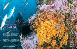 El desconocido mundo submarino de Selkirk