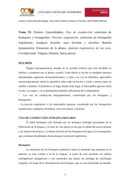 Tema 22. Pulmón. Generalidades. Vías de conducción