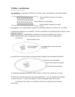 Células y membranas
