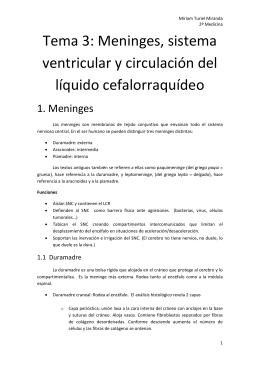 Tema 3: Meninges, sistema ventricular y