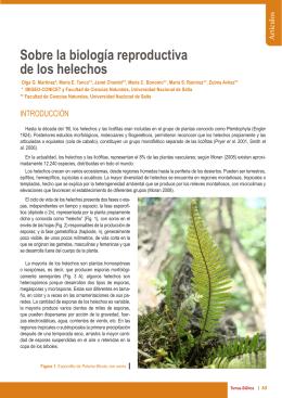 Sobre la biología reproductiva de los helechos. Olga G. Martinez