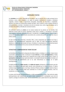 HORTALIZAS Y FRUTAS ESTRUCTURA Y COMPOSICION