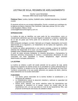 LECTINA DE SOJA, REGIMEN DE ADELGAZAMIENTO