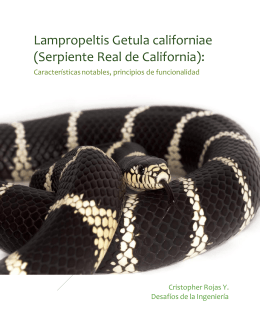 Serpiente Real: