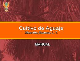 Cultivo de Aguaje Cultivo de Aguaje - Instituto de Investigaciones de