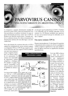 Informe parvovirus