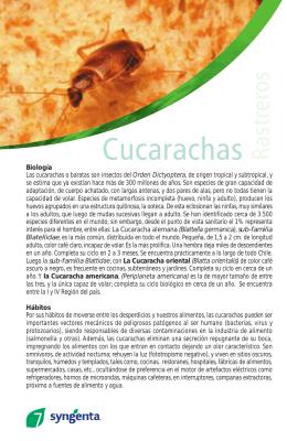Biología Las cucarachas o baratas son insectos del