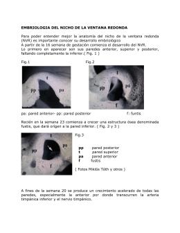 EMBRIOLOGIA DEL NICHO DE LA VENTANA REDONDA Para