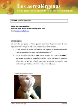 Unidad 6. Epitelios: perro, gato INTRODUCCIÓN Los animales con