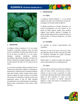 1. DESCRIPCIÓN La albahaca (Ocimun basilicum L