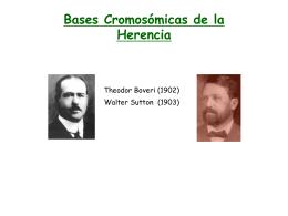 Bases Cromosómicas de la Herencia