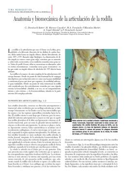 1TM RODILLA anatomia 78