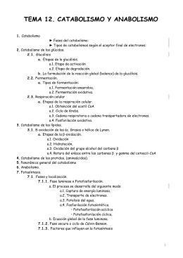 TEMA 12. CATABOLISMO Y ANABOLISMO