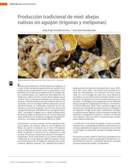 Producción tradicional de miel: abejas nativas sin aguijón