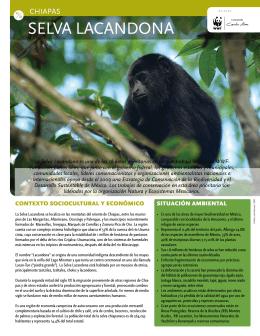 Selva Lacandona Chiapas
