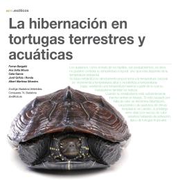 La hibernación en tortugas terrestres y acuáticas