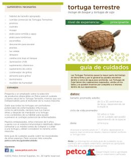tortuga terrestre