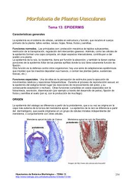 Tema 13: EPIDERMIS - Hipertextos del Área de la Biología