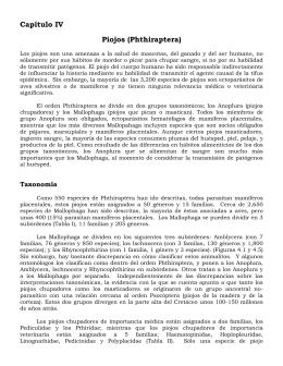 Capítulo IV Piojos (Phthiraptera)