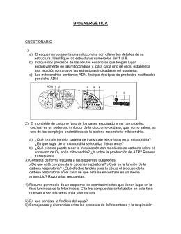 BIOENERGÉTICA - FotosintesisVI