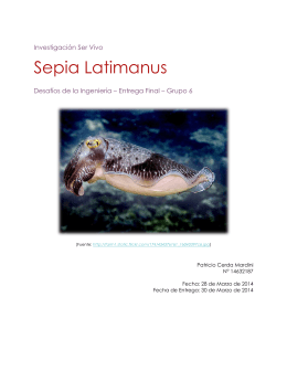 Sepia Latimanus