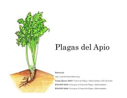 Plagas del Apio