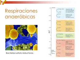 Autótrofos anaerobios no fototróficos.
