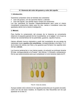 Descarga - Cuaderno para la crianza y estudio del gusano de seda