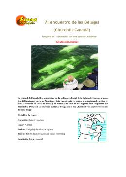 Al encuentro de las Belugas (Churchill-CanadÄ)