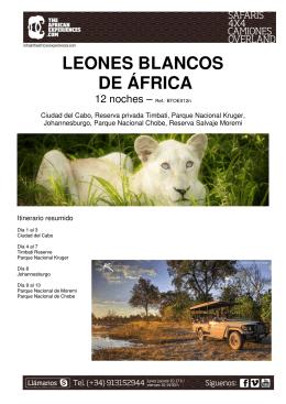 LEONES BLANCOS DE ÁFRICA - TheAfricanExperiences.com