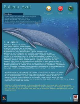 Ballena Azul.indd - Biodiversidad Mexicana